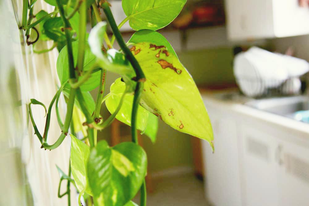 Plant | redleafstyle.com
