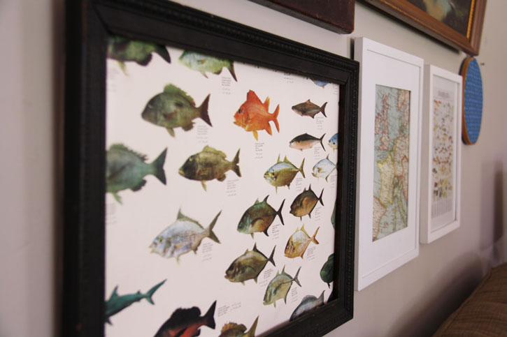 fishy_picture