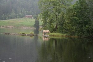 Horse By Water by Jan Hebel
