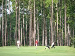 Georgia Pine Trees