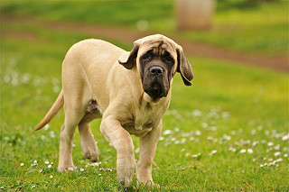 Why Do Dogs Kick Up Dirt After Going Potty?