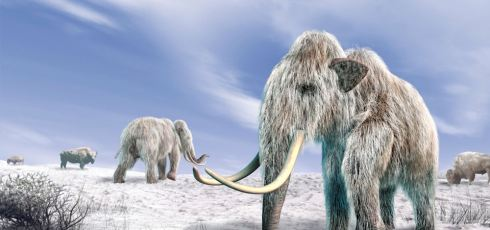 Did Inbreeding Drive Woolly Mammoths To Extinction?
