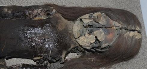 Something is eating 7,000-year-old mummies