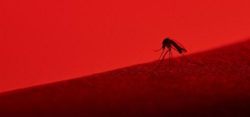 Scientists make breakthrough with malaria vaccine