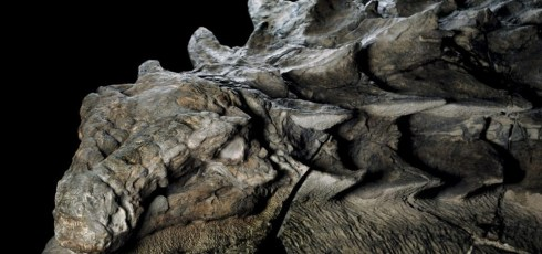 Dinosaur fossil is so well-preserved it looks like a statue