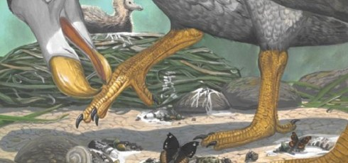 Study reveals the secret life of the Dodo