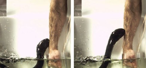 Researcher puts his own body on the line to test eel's shock power