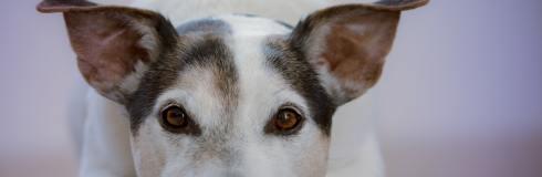 Do Dogs Get Arthritis?