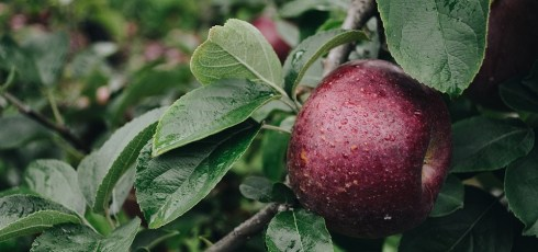 Healthy Nutrition: What Are the Best Foods Rich in Polyphenols