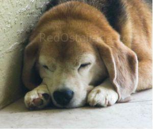 Rocky Sleeping RedOstelinda 2