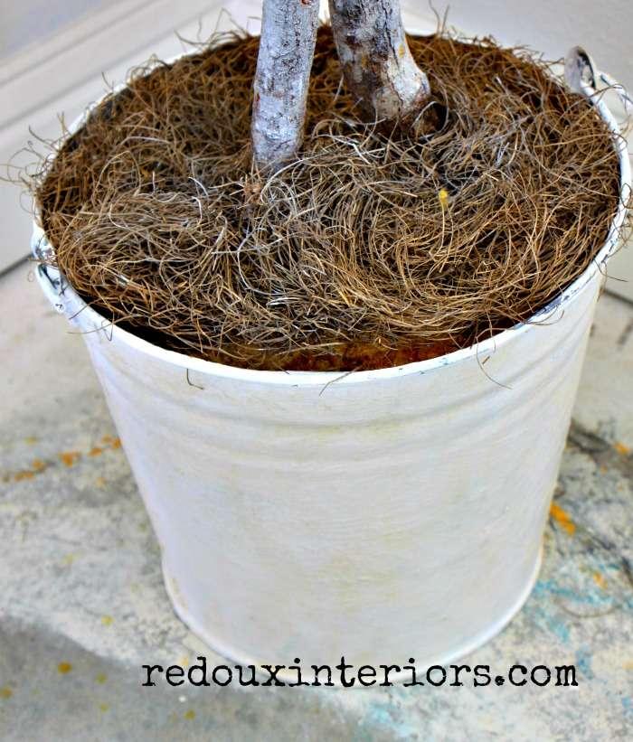 Ficus Tree bucket cece metallic wax redouxinteriors