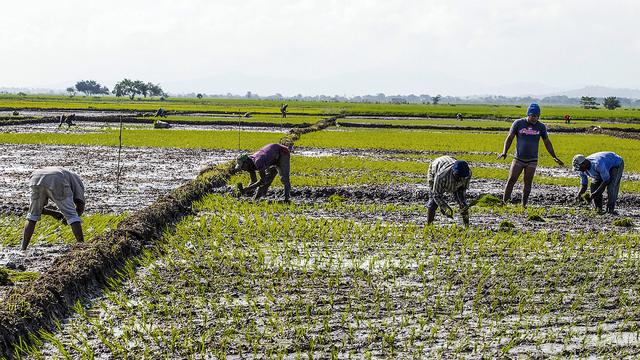 Trabajos Agrícolas Sector Informal