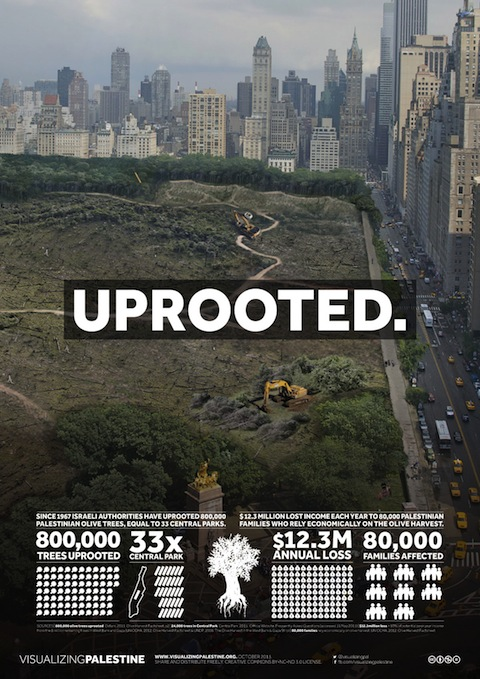 Uprooted Palestinian olive trees