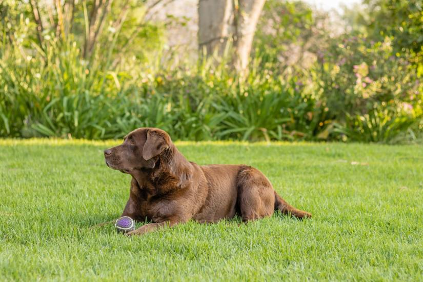 Factors You Need to Consider to Find the Right Wireless Dog Fence