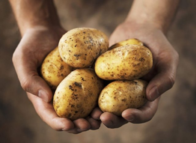 holding potatoes in hands