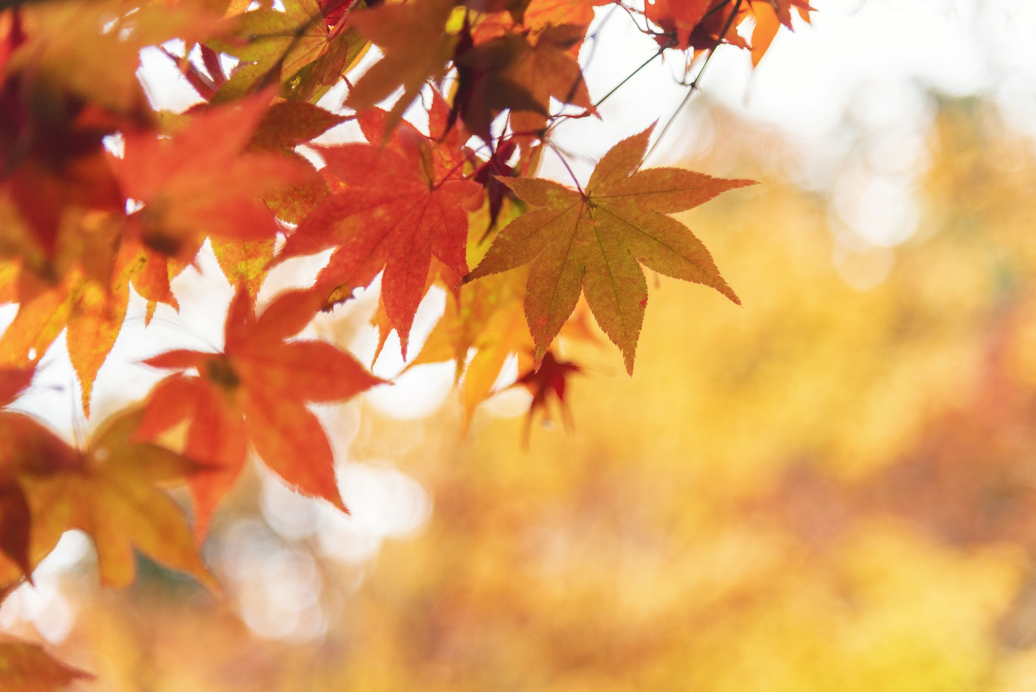 What Are The Reasons Why We Should Love Autumn?