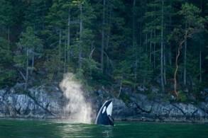 Whale IMG_2805