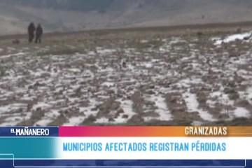 MUNICIPIOS AFECTADOS POR GRANIZADAS REGISTRAN PÉRDIDAS
