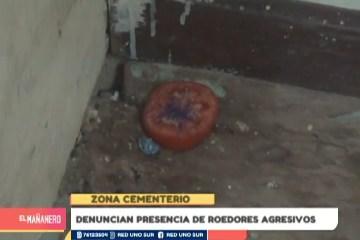 DENUNCIAN LA PRESENCIA DE ROEDORES AGRESIVOS EN LA ZONA DEL CEMENTERIO
