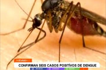 CONFIRMAN SEIS CASOS POSITIVOS DE DENGUE