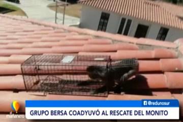 SPAT Y BOMBEROS RESCATARON A UN MONITO EN EL BARRIO MIRAFLORES