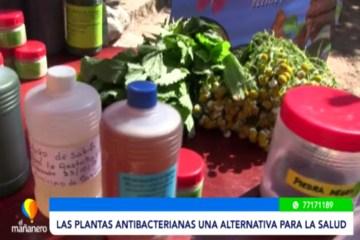 LAS PLANTAS ANTIBACTERIANAS, UNA ALTERNATIVA PARA LA SALUD