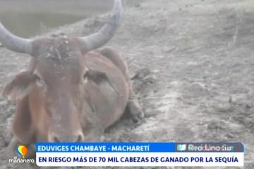 MÁS DE 70 MIL CABEZAS DE GANADO EN RIESGO POR LA SEQUÍA