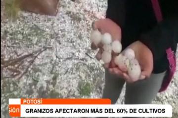 GRANIZOS AFECTARON A MÁS DEL 60% DE LOS CULTIVOS