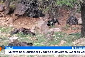 SE INVESTIGA LA MUERTE DE 35 CÓNDORES EN LADERAS NORTE