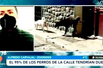 TEMA DEL DÍA: EL 95% DE LOS PERROS CALLEJEROS TENDRÍAN DUEÑO
