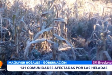 131 COMUNIDADES AFECTADAS POR LAS HELADAS