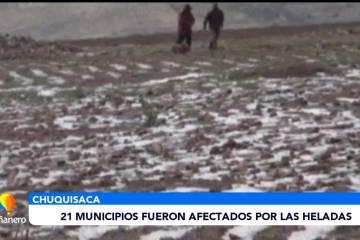 21 MUNICIPIOS FUERON AFECTADOS POR LAS HELADAS
