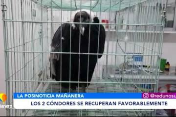 LOS DOS CÓNDORES SE RECUPERAN FAVORABLEMENTE