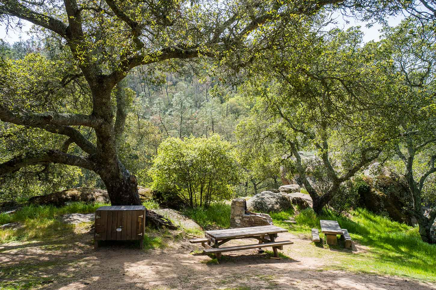Last summer, we found ourselves grounded — and staying close to home — instead of jetting off on vacations. Live Oak Campground