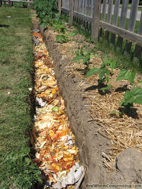 Can You Use Leaves Mulch