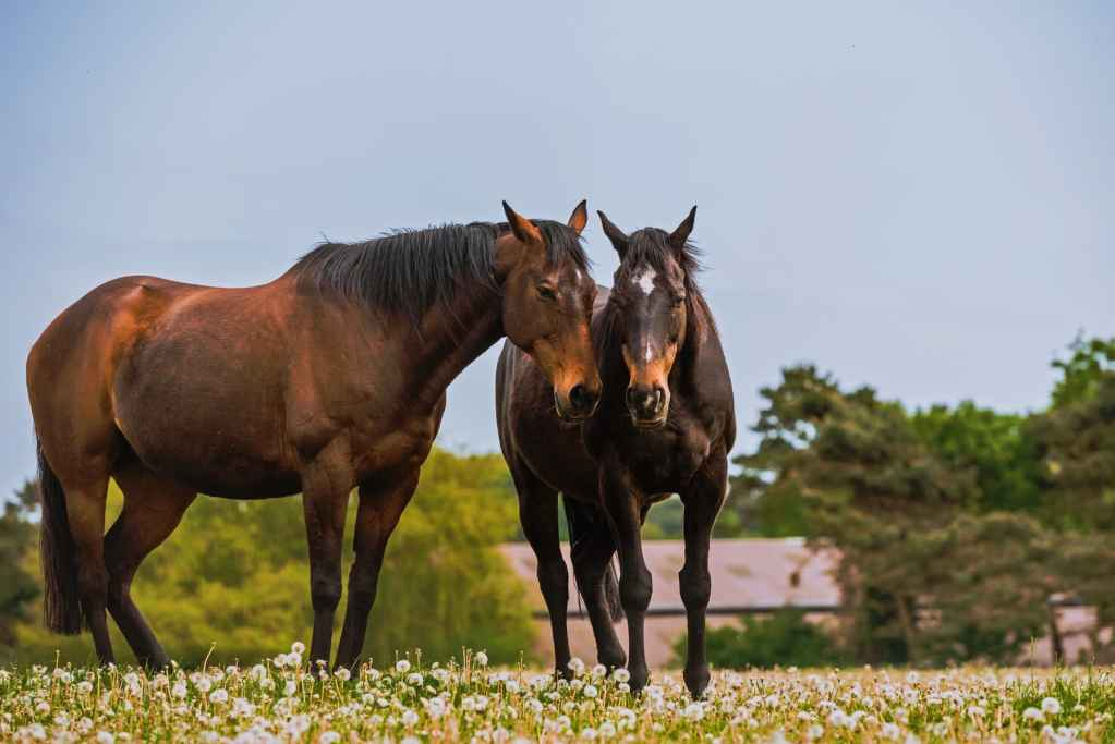 Equine photography, Suffolk