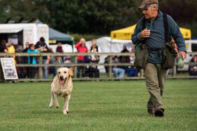 Falconry & Countryside Show, Stonham Barns, Suffolk