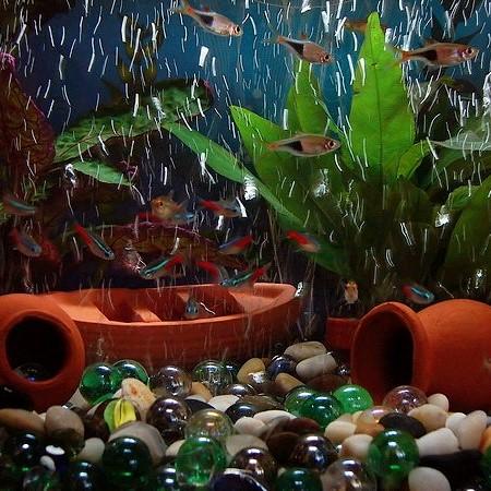 Aquarium Temperature
