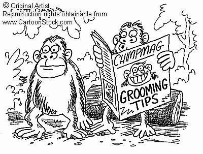 Social Grooming In Primates: Site