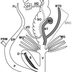 Slug Anatomy Diagram Coleman Mobile Home Furnace Wiring Bio 342 Fall 06