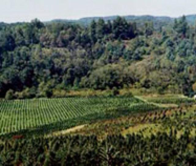 Rif Panorama