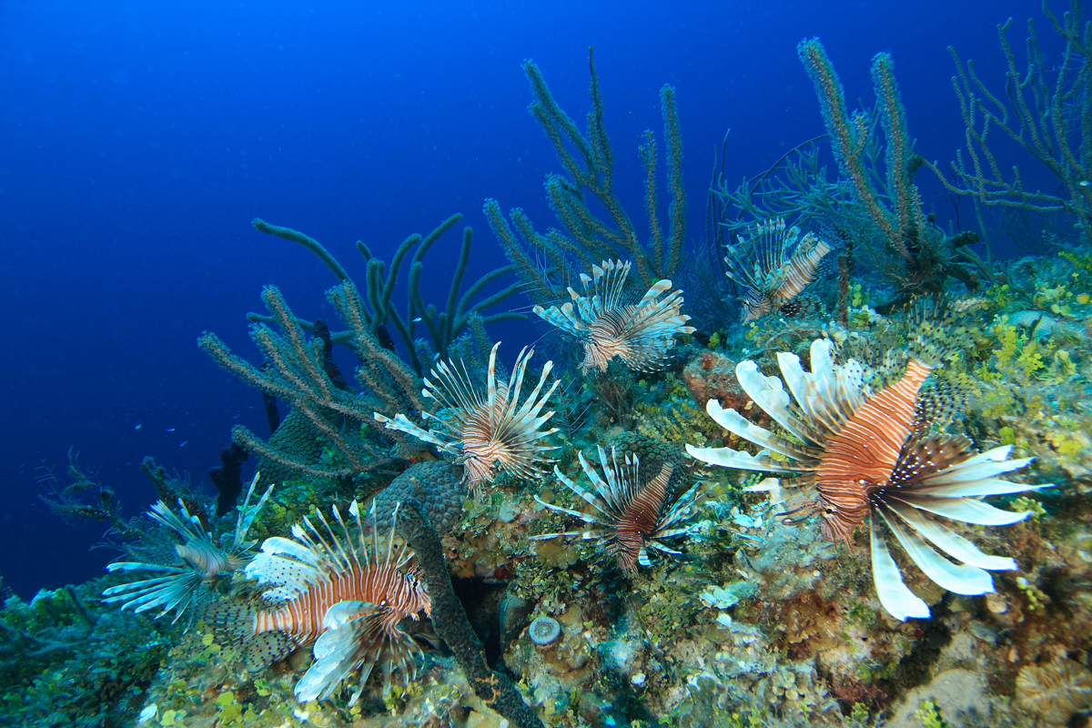 Noaa Coral Reef Conservation Program And Conservation