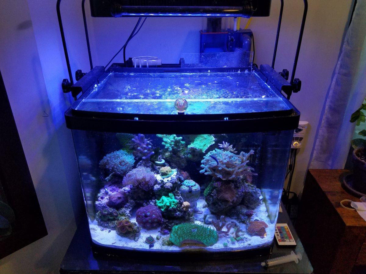 Biocube Dosing Setup  REEF2REEF Saltwater and Reef