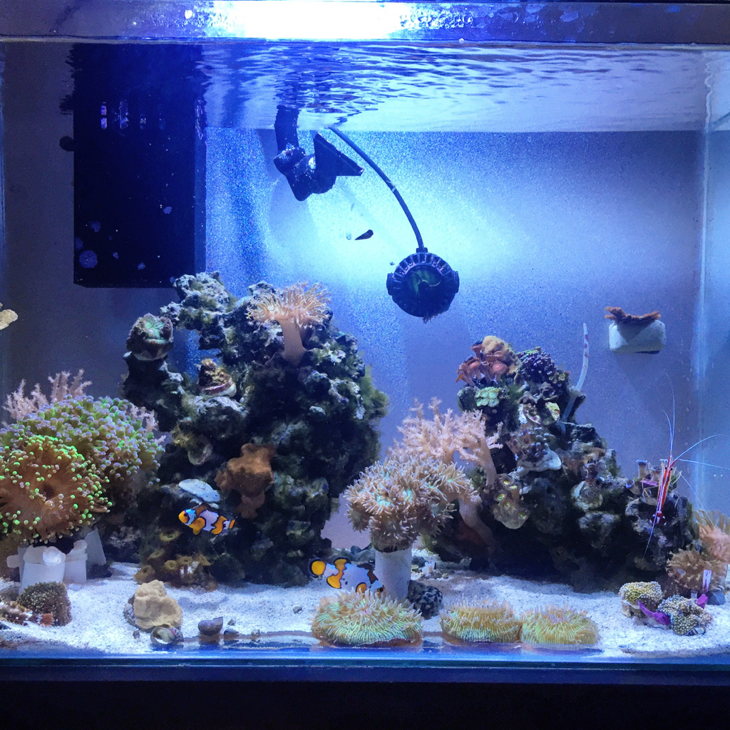 Minimalist Aquascaping Page 11 REEF2REEF Saltwater And