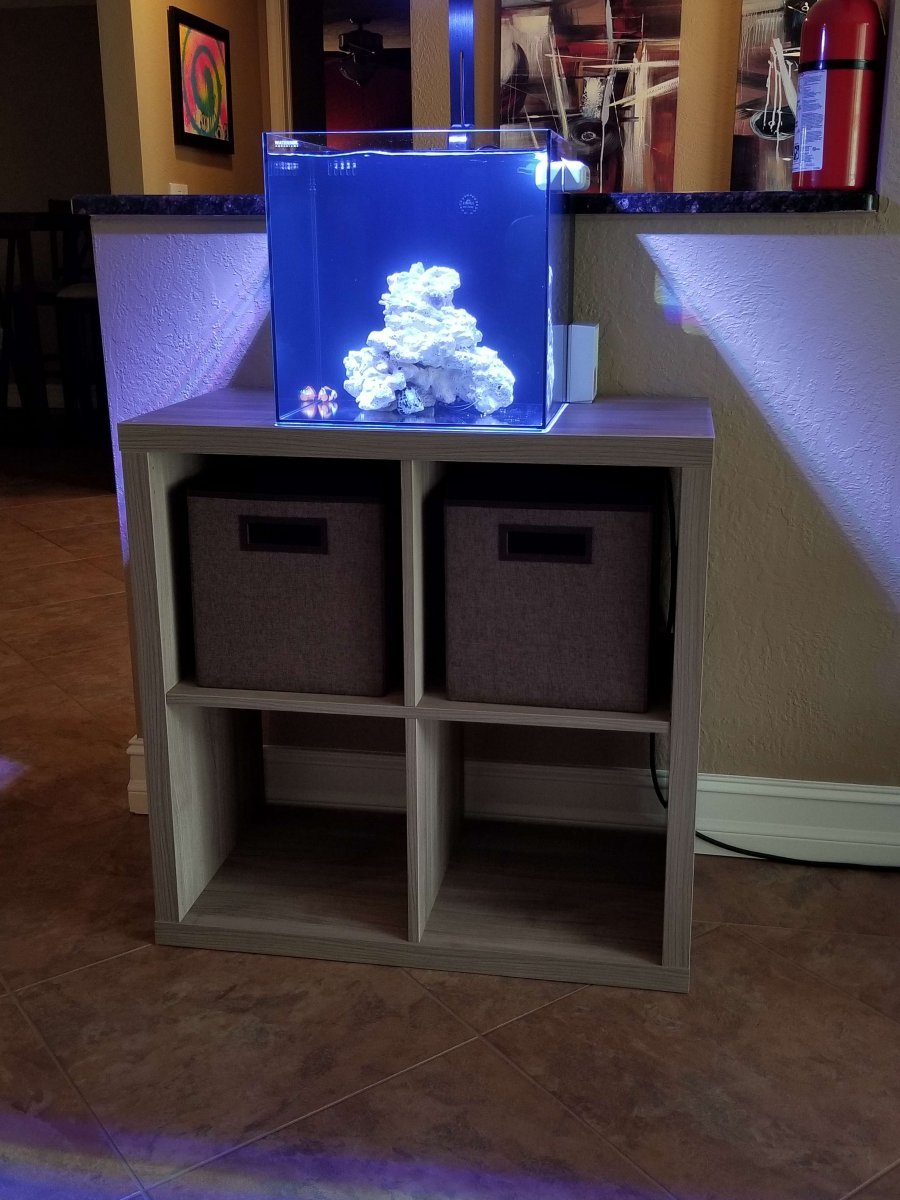Waterbox 10 gallon AIO  REEF2REEF Saltwater and Reef