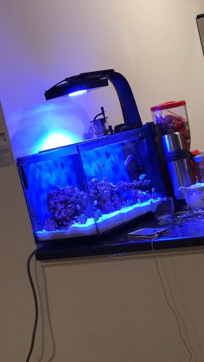 Best lights for fluval evo 135  REEF2REEF Saltwater and