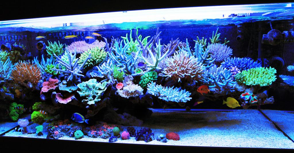Floating Aquascape Questions REEF2REEF Saltwater And