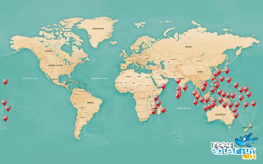 Areale biogeografico Paracanthurus hepatus