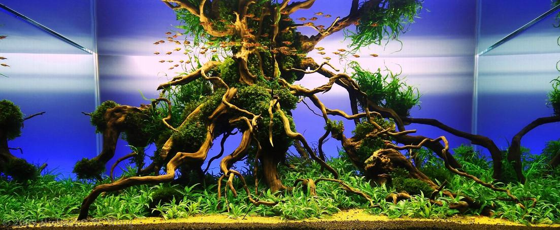 Aquarismo De Agua Doce Reefsimples Blog De Aquarismo Do Roberto Pinto