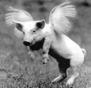 Might this piggie take off?